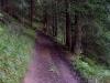 tratto strada silvo-pastorale di Quoilo dsc01394-600