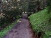 tratto strada silvo-pastorale di Quoilo dsc01406-600