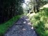 tratto strada silvo-pastorale di Quoilo dsc01411-600