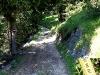 tratto strada silvo-pastorale di Quoilo dsc01421-600