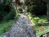 tratto strada silvo-pastorale di Quoilo dsc01429-600