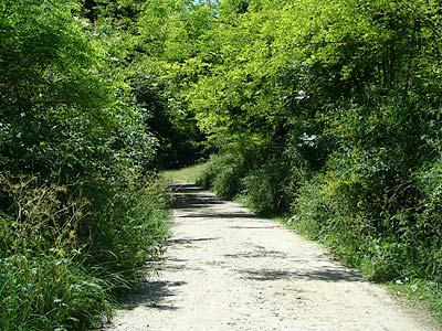 Ancora passeggiata di Ligonte: 18 giugno ...