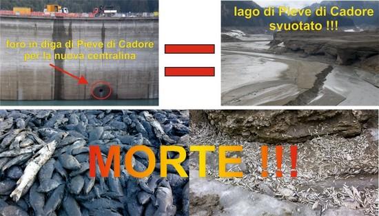 lago Centro Cadore e morìa di pesci marzo 2012