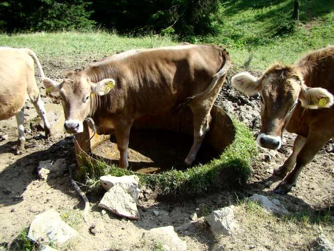 domenica 08 luglio 2012 - abbeveratorio del Ciadin a Col Vidal: c'è mica un po' d'acqua?