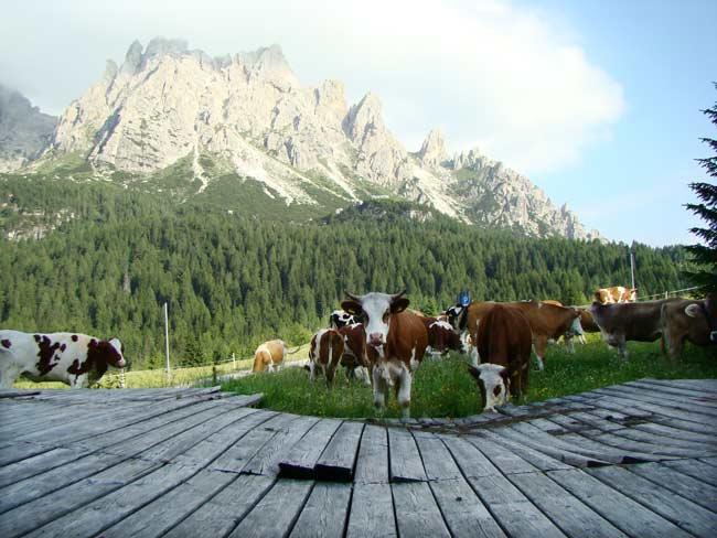zoccolone di montagna presso la Caserma di Soracrepa 002