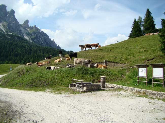 zoccolone di montagna presso la Caserma di Soracrepa 004