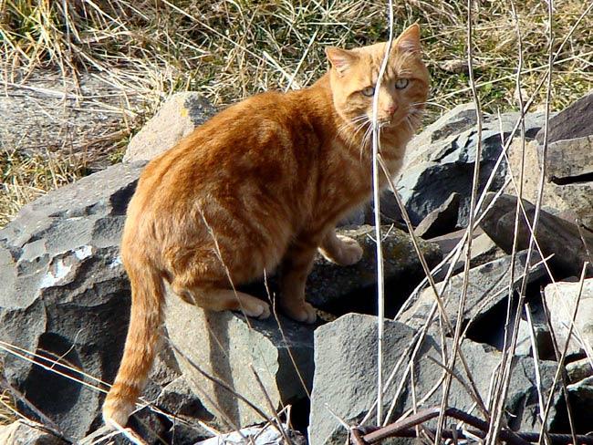 gatto presso la caserma di Soracrepa a Pian dei Buoi -002