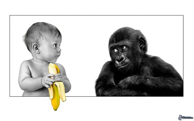 [immagini.4ever.eu] bambino, scimmia, banana 161297p