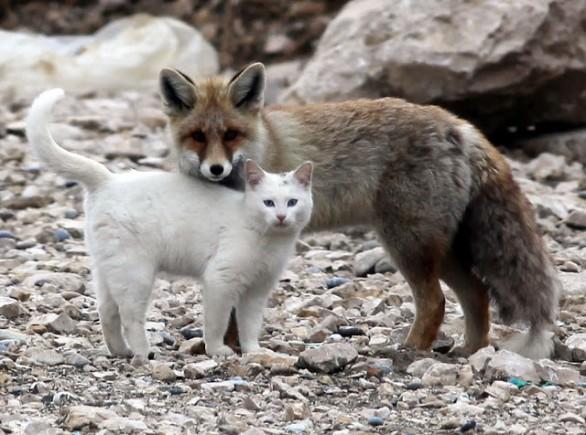 il gatto e la volpe ...