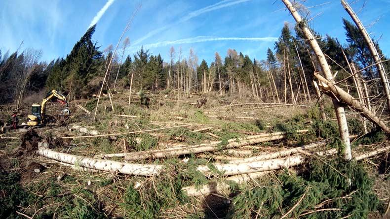 Riva: esbosco degli schianti da vento del 29 ottobre 2018; sopra... ci stanno arrivando...