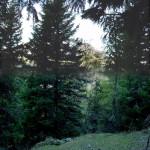"""Ancora una """"panoramica"""", questa volta verticale, con un difetto tonale ma ben rappresentativa del muro di alberi davanti alla postazione"""