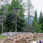 Inizio della trincea durante i lavori di ripristino: tronchi in allestimento e abbruciamento della ramaglia