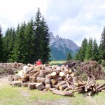 Pezzatura dei tronchi e accumulo della ramaglia per il successivo abbruciamento