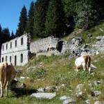 La parte centrale ha ceduto e favorito l'insediarsi della vegetazione tra le macerie